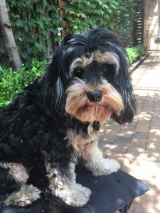 olive-dog